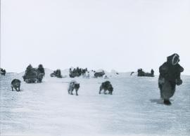 Arctic hunting folk on their way across the ice