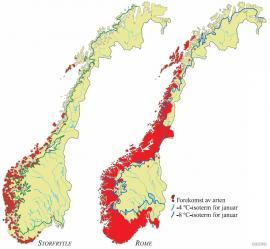 Eksempler på kystplanter som også vokser i mindre vintermilde områder