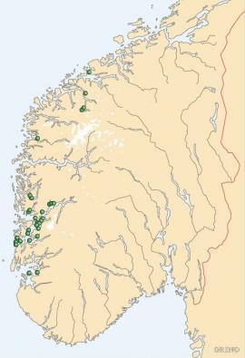 Utbredelseskart for bergfaks