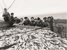 Austevollmannskap på M/S «Sollund II» med fulle sildebingar etter drivgarnfiske utanfor Island i 1959.