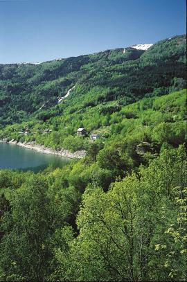 Lauvskogliene langs Hardangerfjorden