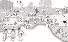 Våtmarkene – vassmetta og verdifulle