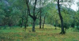 Burial mounds at Hæreid