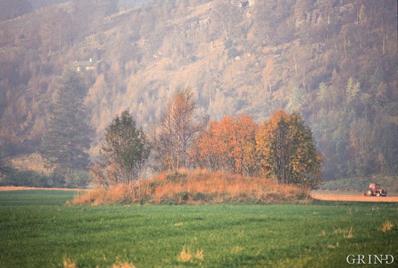 Gravhaugane ligg midt på dei breie bøane i jordbruksbygda Etne