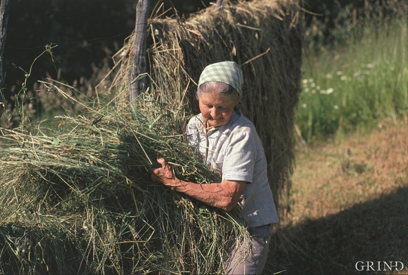 På mange gardsbruk var kvinnene hovudaktørane i den daglege drifta