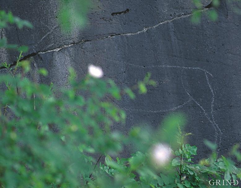 Hjorten på Bjelkaneset i Kvam