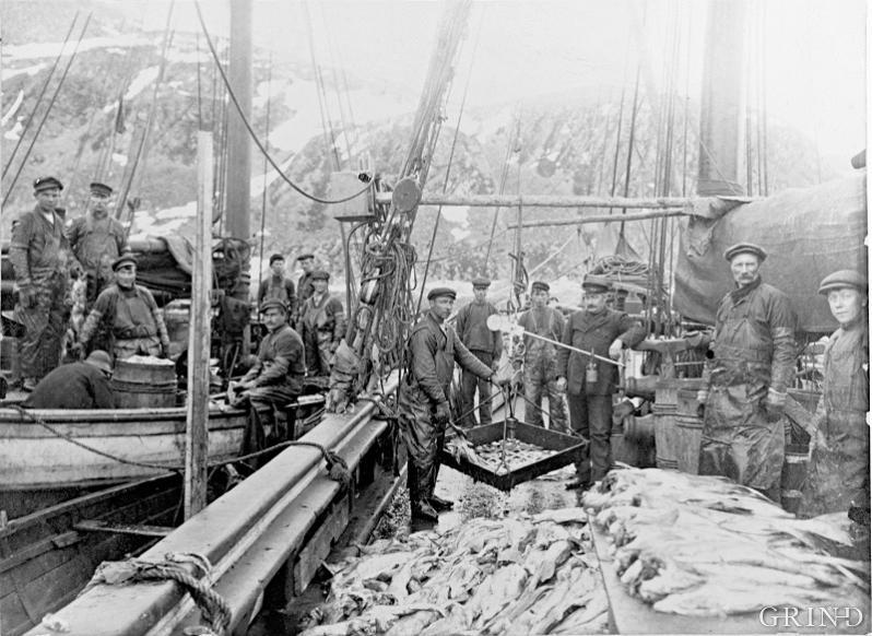 Fiskehandsaming ombord i hardangerjaktar under Lofotfisket