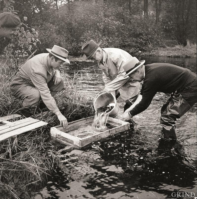 Dersom ikkje naturen hadde fått «hjelp» av menneske, ville omgrepet «fjellaure» vore heilt ukjent i Hordaland.