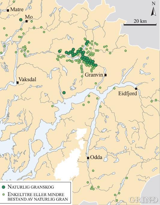 Kartlegging av naturlig vekst av granskog