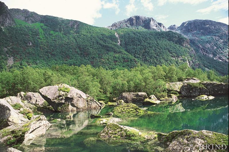 Hordaland gror igjen: I dag ser vi ikke stien fordi fjellsiden er gjengrodd med tett lauvskog.