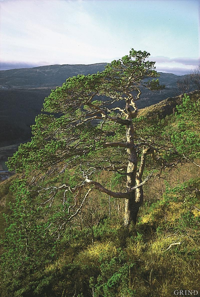 Hauglandsdalen i Bergen